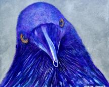 1_raven