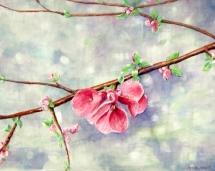 First_Blossom