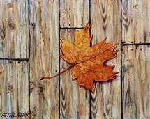 1_autumn_leaf