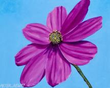 1_bold_pink_daisy