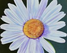 1_daisy