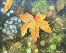 1_fall_leaf