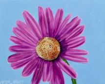 1_pink_daisy
