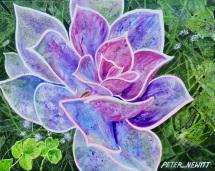 1_purple_flower