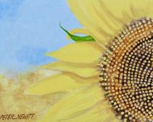 1_small_sunflower