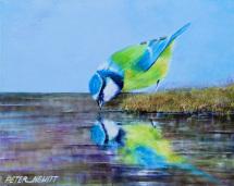 1_thirsty_bird