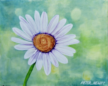 1_white_daisy