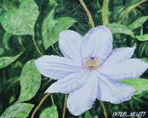 1_white_petals
