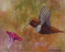 Humming_Bird