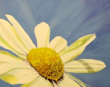 bold_daisy
